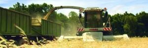 KTG Agrar fährt die Ernte ein - Anleger auch