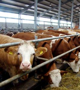 DGAP-News: Ekosem-Agrar mit guten Ernteerträgen und deutlichem Wachstum in der Milchproduktion in den ersten neun Monaten 2016