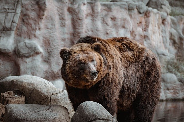 Bärenmarktrallye